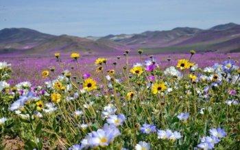 fototapeta-na-sciane-wiosenna-laka-obsypana-kwiatami-fp-1655_21779